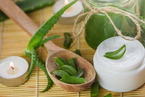 DA, tako je, aloja vera pomaže regeneraciji kože oštećenoj od sunca! Ali, da li znate koje još benefite pruža ova čudesna biljka?